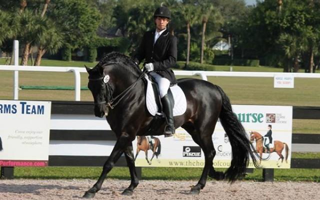 Horse Boarding Service Miami