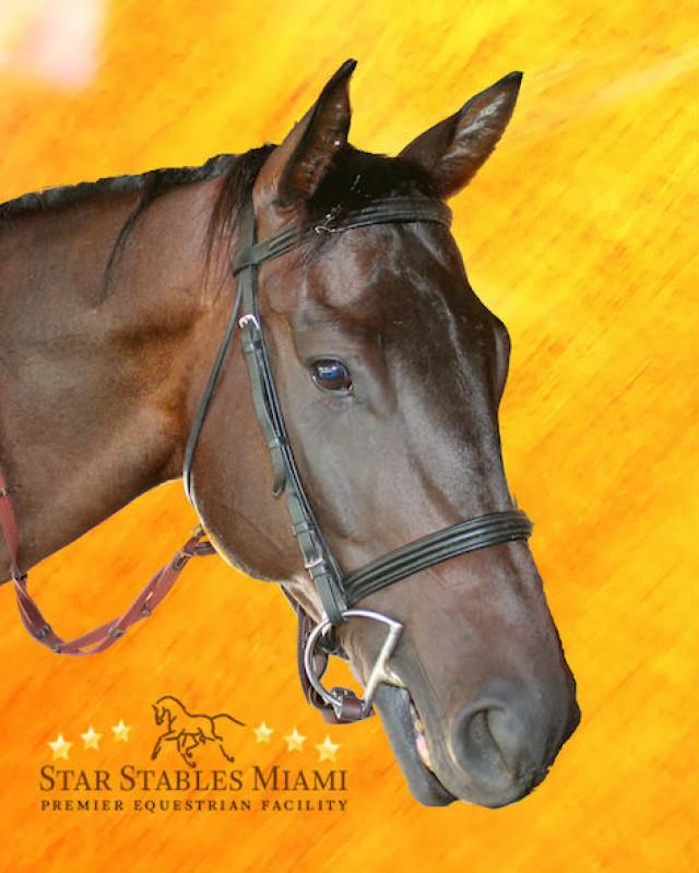 Horse for Sale in Miami
